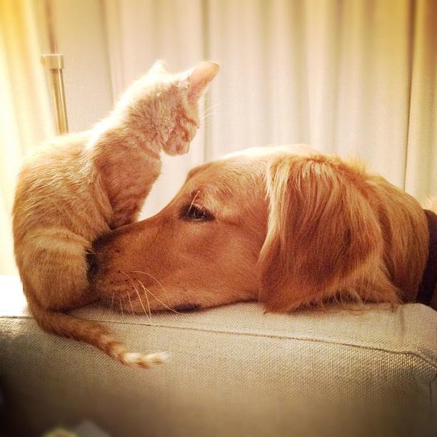 casa de mascotas . Casa con mascotas
