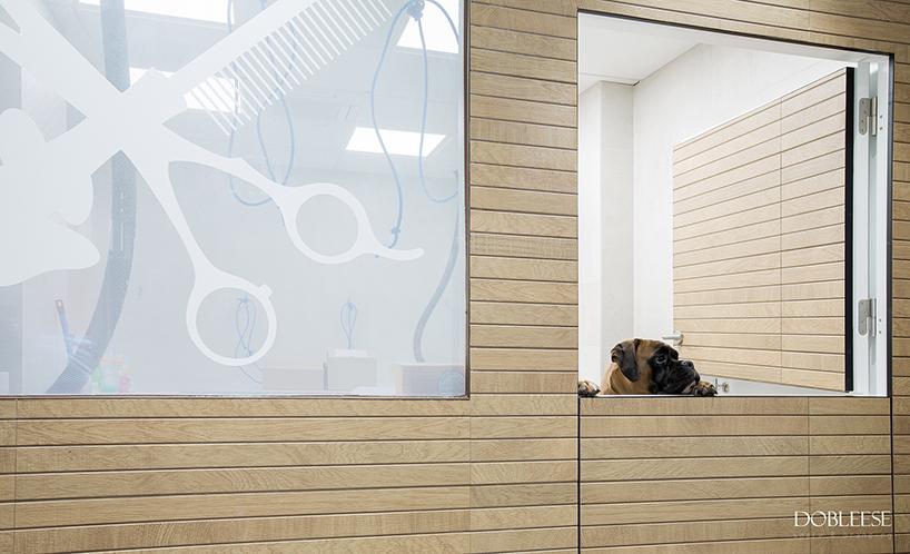 Peluqueria canina y felina clinica veterinaria Constitucion por Dobleese Valencia