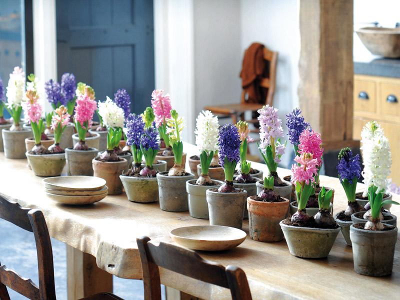 Plantas alegres y coloridas para decorar